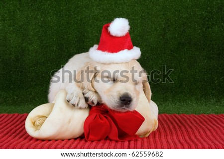 Golden Retriever puppy with Santa hat and huge bone with red bow - stock photo