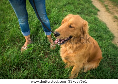 Golden retriever with her owner