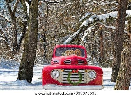 golden retrievers in antique red truck with Christmas wreath in winter woods