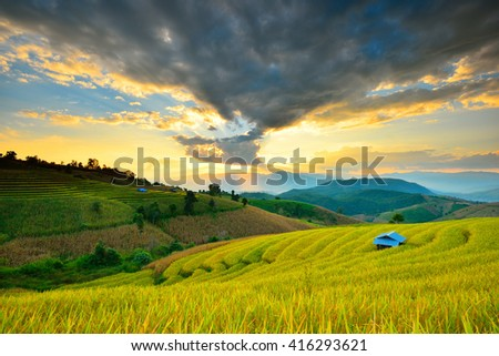 Golden rice fields in the countryside of Thailand The beautiful sunset at Terraced Paddy Field in Mae-Jam Village , Chaingmai Province of Thailand  - stock photo