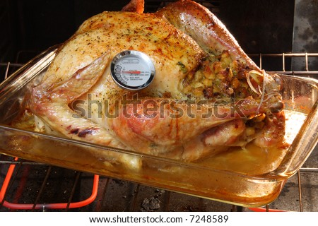Golden Roasted Turkey in the oven with a meat thermometer. - stock photo