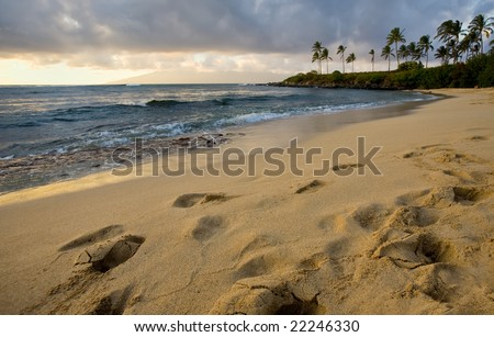 Golden sandy beach at sundown, tropical palm trees in the distance - stock photo