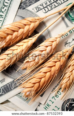 golden spikes of wheat with dollar bills
