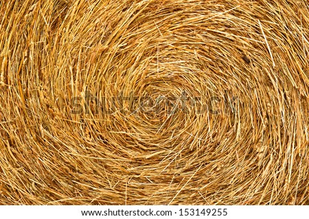 Golden straw texture background, close up - stock photo
