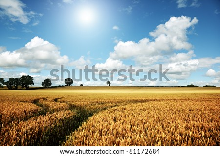 Golden summer landscape, wheat farm field with blue sky and cloudscape - stock photo