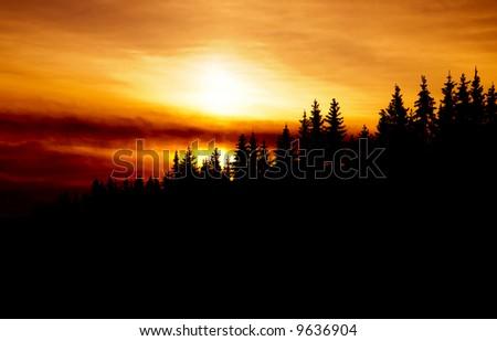 golden sun over a norhtern forest - stock photo