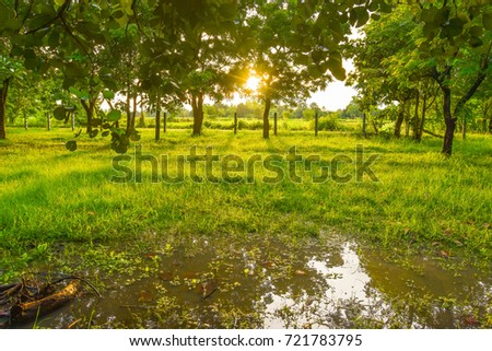 Golden sun shining through the woods. And the green grass in the morning at the rain.