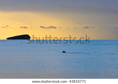 golden sunrise over gulf of Mexico with dolphin