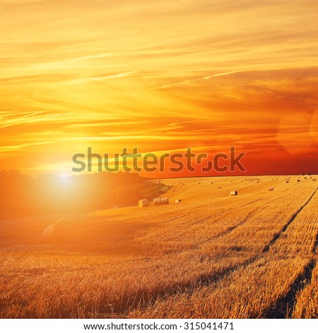 Golden Sunset Over Field with Barley - stock photo