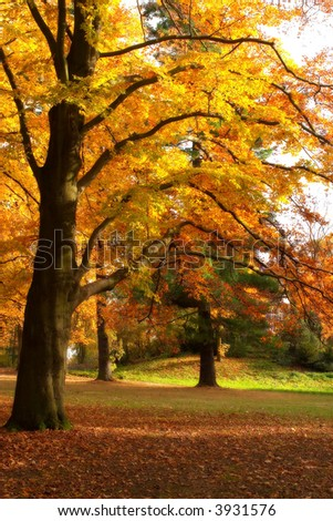 golden tree - stock photo