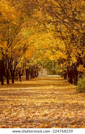 golden tree alley with falling leaves, autumn landscape - stock photo