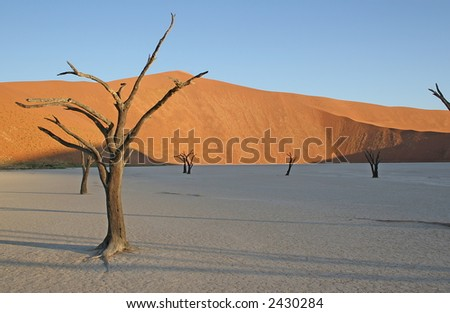 Golden Tree, Dead Vlei, Namibia - stock photo