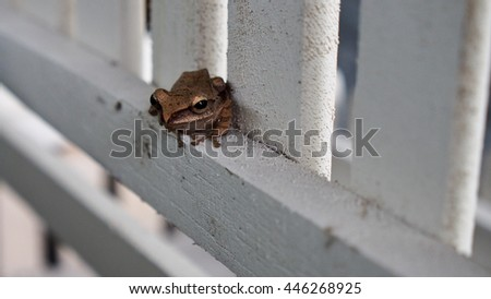 Golden Tree Frog in Fence - stock photo