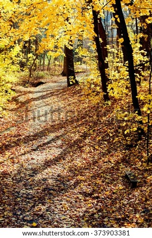Golden trees and a pathway in a autumn forest