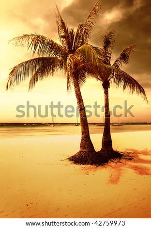 golden tropical sunset-artistic toned picture - stock photo