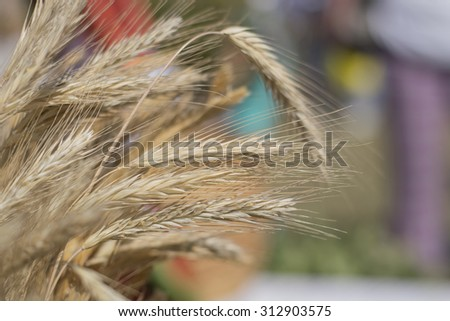 Golden wheat ears close up outdoors in autumn - stock photo