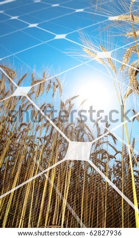 Golden wheat  field against the sun with photovoltaic panel - stock photo