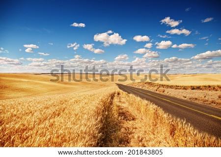 Golden wheat field, road through, blue sky - stock photo