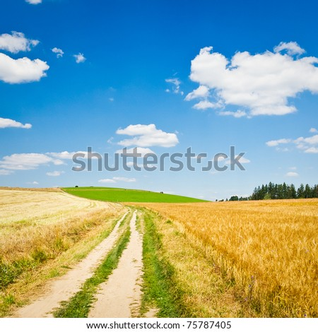 golden wheat field with a road - stock photo
