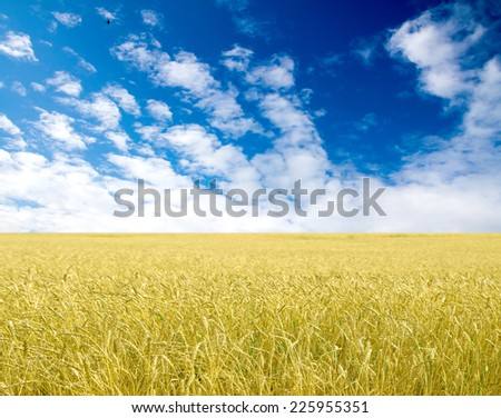 Golden wheat field with blue sky in background - stock photo