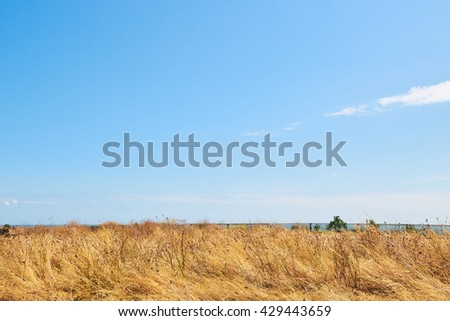 Golden wheat on a blue sky, leaning on a side, space for text