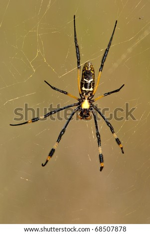 Golder Orb Spider - stock photo