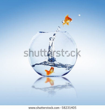 Goldfish and Aquarium. Collage. - stock photo