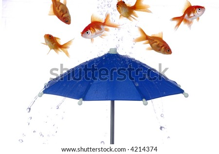 Goldfish and water bounce off of a bright blue umbrella. White background. - stock photo