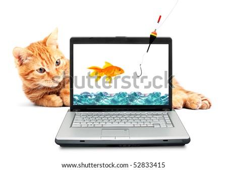 Goldfish, cat, laptop isolated on white background - stock photo