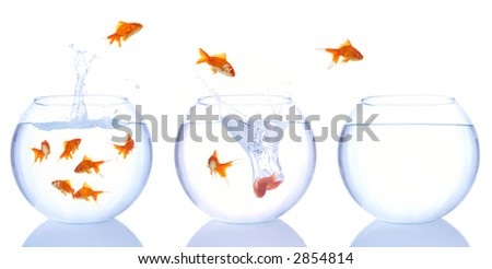 goldfish escape - stock photo