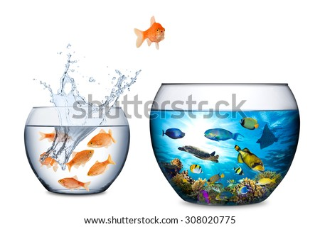 goldfish escape concept with big coral reef fishbowl