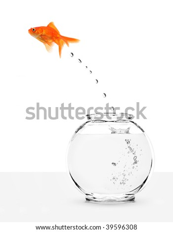 goldfish escaping from fishbowl isolated on white background - stock photo