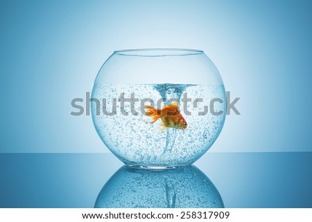 Goldfish flees for a tornado in a fishbowl - stock photo