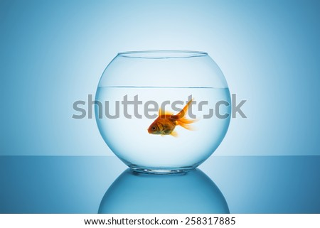 goldfish floats in a fishbowl - stock photo