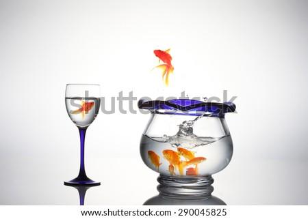 Goldfish goldfish bowl - stock photo