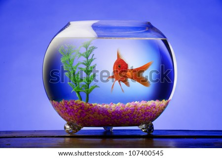 Goldfish in a bowl with bright stones and a green plant - stock photo
