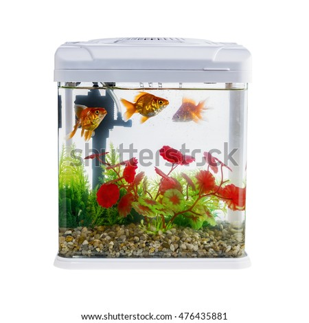 Goldfish in a daylight water tank (aquarium)