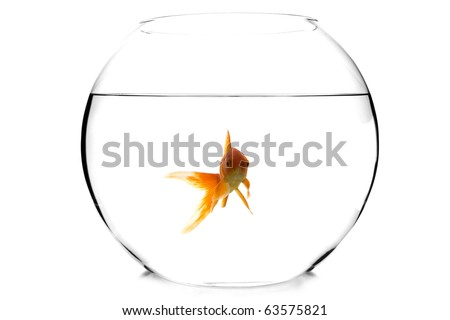 goldfish in a fishbowl on white background - stock photo