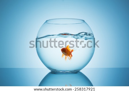 goldfish in a fishbowl with wavy water - stock photo