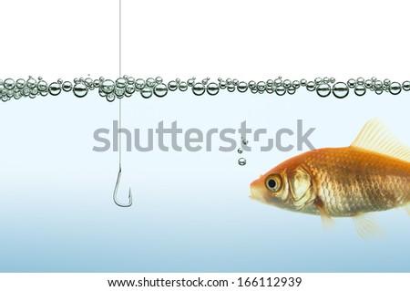 goldfish in an aquarium watching a hook - stock photo