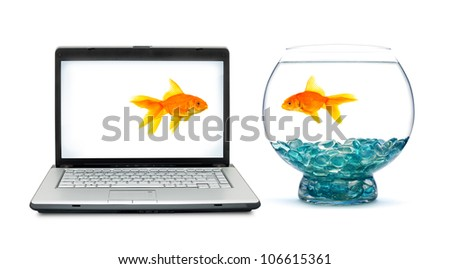 Goldfish in aquarium on a white background - stock photo