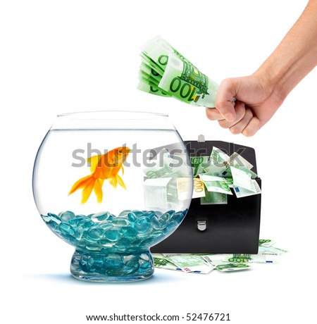 Goldfish in aquarium with money on a white background