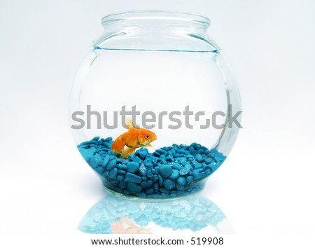 Goldfish in bowl - stock photo
