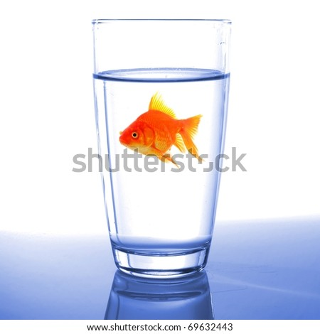 goldfish in drink glass showing jail prison free or freedom concept - stock photo