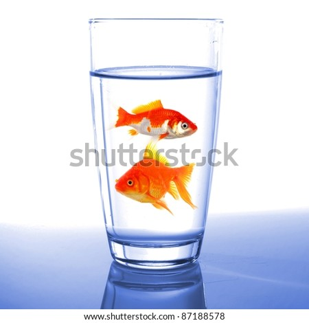 goldfish in glass of water showing challenge or creativity concept - stock photo