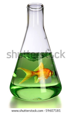 Goldfish in laboratory flask over white background - With clipping path - stock photo