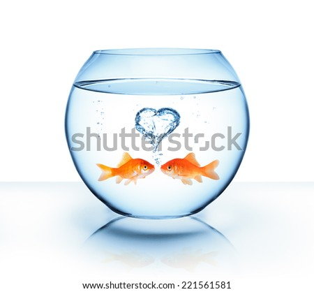 goldfish in love - romantic concept  - stock photo