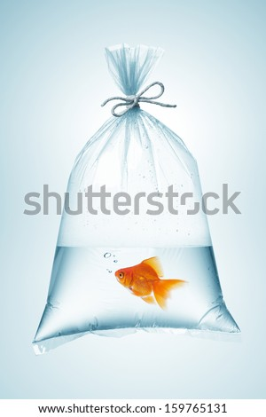 goldfish in plastic bag, tied with rope - stock photo