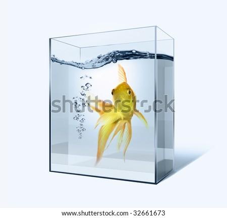 Goldfish in the auqarium - stock photo
