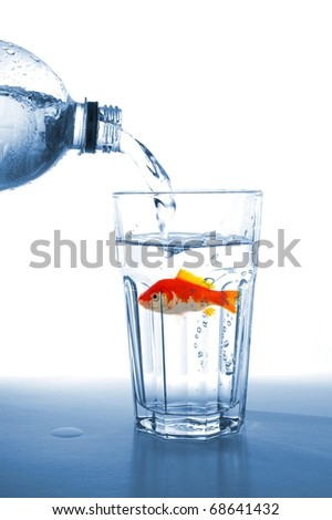 goldfish in water glass fishtank isolated on white background - stock photo